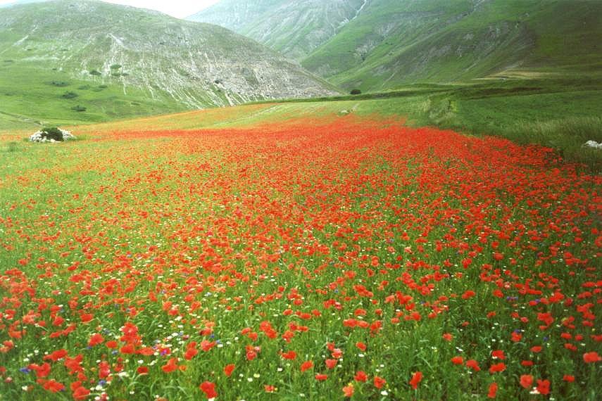 jordskaelv_linser_blomst
