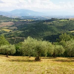 olivenolie_byitaly