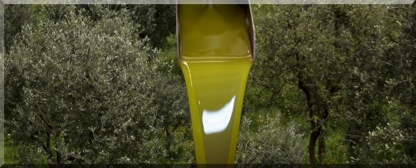 olivenolie_villa_stabbia_2